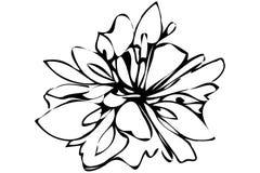 Wektorowego nakreślenia abstrakcjonistyczny kwiat Fotografia Stock