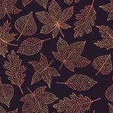 Wektorowej jesieni bezszwowy wzór z na ciemnym tle dębu, topoli, buku, klonu, osiki i końskiego kasztanu liści konturem, ilustracja wektor