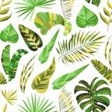 Wektorowej tropikalnej dżungli bezszwowi wzory Zdjęcia Royalty Free