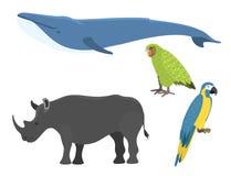Wektorowej wielorybiej ilustracyjnej północy powierzchni humpback oceanu morskiego ssaka głębokiej przyrody zagrożonych gatunków  Zdjęcia Stock