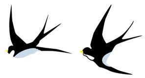 Wektorowi dymówka ptaki Obrazy Royalty Free