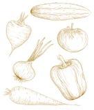 wektorowi ilustracj warzywa Obrazy Royalty Free