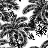 Wektorowi ilustracyjni Bezszwowi czarny i biały palma liście i fru royalty ilustracja