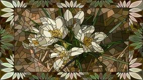 Wektorowi ilustracyjni kwiaty biali krokusy Fotografia Stock