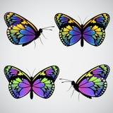 Wektorowi kolorowi motyle Zdjęcie Royalty Free