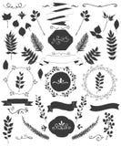 Wektorowi kwiecistego projekta elementy, gałąź, liście, faborki, zawijasy i ramy, Zdjęcia Royalty Free