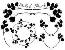 Wektorowi Storczykowi kwiatów kształty Dividers, ramy i wianki, Fotografia Royalty Free
