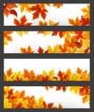 Wektorowi sztandary z kolorowymi jesień liśćmi Eps-10 Zdjęcia Stock