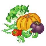 Wektorowi warzywa ustawiający z brokułami, zielone smyczkowe fasole, pieprz, Fotografia Royalty Free