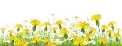 Wektorowi wiosna kwiaty, żółci chamomiles i dand, royalty ilustracja