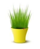 Wektorowy żółty garnek z zieloną trawą ilustracji