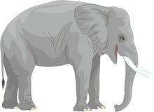 Wektorowy afrykański słoń odizolowywający na bielu ilustracji