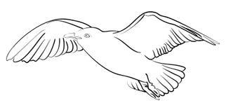 Wektorowy atramentu nakreślenia seagull w locie Obrazy Stock