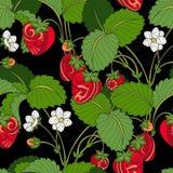 Wektorowy Bezszwowy Barwiony owoc wzór ilustracji