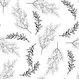Wektorowy bezszwowy konturów liści wzór tła czarny karcianego projekta kwiatu fractal dobrego ogange plakatowy biel Natury ilustr royalty ilustracja