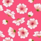 Wektorowy bezszwowy Sakura menchii wzór Ilustracja Wektor