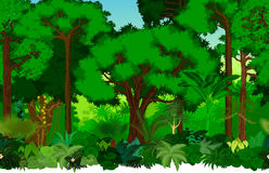 Wektorowy bezszwowy tropikalny tropikalny las deszczowy dżungli tła wzór ilustracja wektor