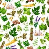 Wektorowy bezszwowy wzór pikantności ziele seasonings zdjęcia stock