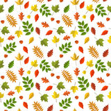 Wektorowy bezszwowy wzór z kolorowymi jesień liśćmi Obraz Stock