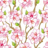 Wektorowy bezszwowy wzór z konturu kwiatu kwitnącą Morelową wiązką, gałąź i zieleń liśćmi na białym tle, ilustracja wektor