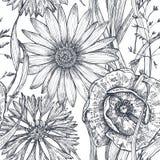 Wektorowy bezszwowy wzór z ręka rysującym maczkiem i inny kwitnie i rośliny Fotografia Stock