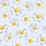 Wektorowy bezszwowy wzór z rumiankiem Piękni kwiaty w pastelowych kolorach Obrazy Stock