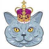 Wektorowy Brytyjski kot w złocistej koronie royalty ilustracja