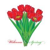 Wektorowy bukiet z konturów tulipanów czerwonymi kwiatami i zielenią opuszcza odosobniony na bielu Ozdobni kwieciści elementy dla Fotografia Stock