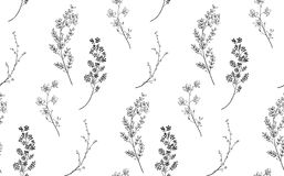Wektorowy Czarny Bezszwowy wzór z Patroszonymi gałąź, rośliny royalty ilustracja