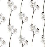 Wektorowy Czarny Bezszwowy wzór z Patroszonymi Storczykowymi kwiatami Zdjęcia Stock