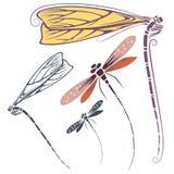 Wektorowy dragonfly dla zaproszeń, reklamy i kartka z pozdrowieniami, ilustracji