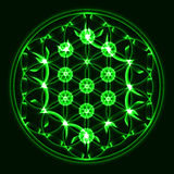 Wektorowy drzewo życie, święty geometria symbol, zieleń Zdjęcie Stock