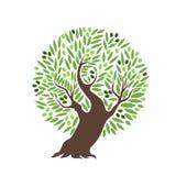 Wektorowy drzewo oliwne z oliwkami na białym tle royalty ilustracja