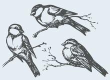 Wektorowy freehand rysunek Tits, wróble i gile na branc, ilustracja wektor