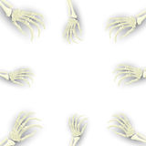 Wektorowy Halloweenowy tło z zredukowaną ręką dla promocyjnego, p Obrazy Stock