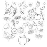 Wektorowy herbata set ilustracji