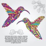 Wektorowy Hummingbird Obrazy Stock