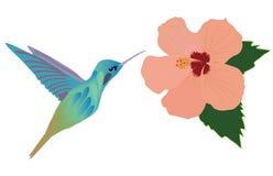 Wektorowy hummingbird kwiat Obrazy Stock