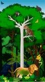 Wektorowy Ilustracyjny afrykański dżungla tropikalny las deszczowy z zwierzętami ilustracja wektor