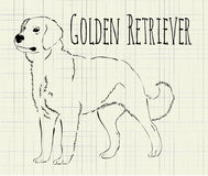 Wektorowy ilustracyjny golden retriever Fotografia Royalty Free