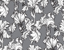 Wektorowy ilustracyjny Kwiecisty kwiatu irys Zdjęcie Royalty Free