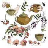 Wektorowy ilustracyjny ustawiający ziołowa herbata, teapot, kubek w rękach, rosehip, kwitnący sally w brązie i zieleni colours od royalty ilustracja