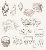 Wektorowy jajeczny kurczak hodowli set Obrazy Royalty Free