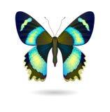 Wektorowy jaskrawy motyl odizolowywający 10 eps Fotografia Stock