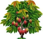 Wektorowy kakaowy drzewo royalty ilustracja