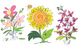 Wektorowy kolorowy kreatywnie słonecznik, orchidee i menchia kwiaty, Stosowny dla kartka z pozdrowieniami ilustracja wektor