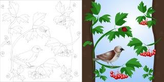 Wektorowy kolorystyki strony wróbel na drzewie ilustracji