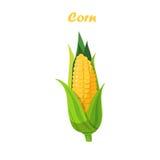 Wektorowy kukurydzany cob Zdjęcia Stock