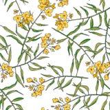 Wektorowy kwiecisty bezszwowy wzór z musztard gałąź odizolowywać na bielu Ręka rysująca botaniczna tekstura z żółtymi kwiatami Zi ilustracja wektor