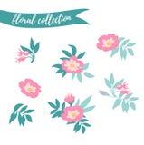 Wektorowy kwiecisty set Kolorowa kwiecista kolekcja z liśćmi i kwiaty wręczamy patroszonego Obrazy Stock